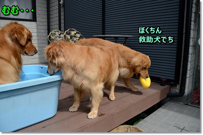 DSC_7231救助犬なのだ