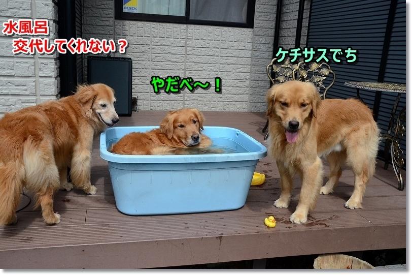 DSC_7247水風呂 代わってくれない