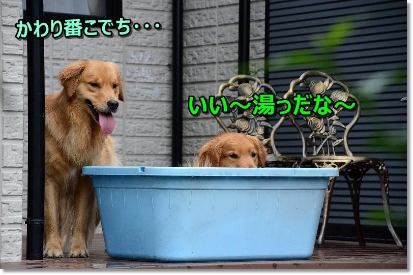 DSC_7284いい湯だな~