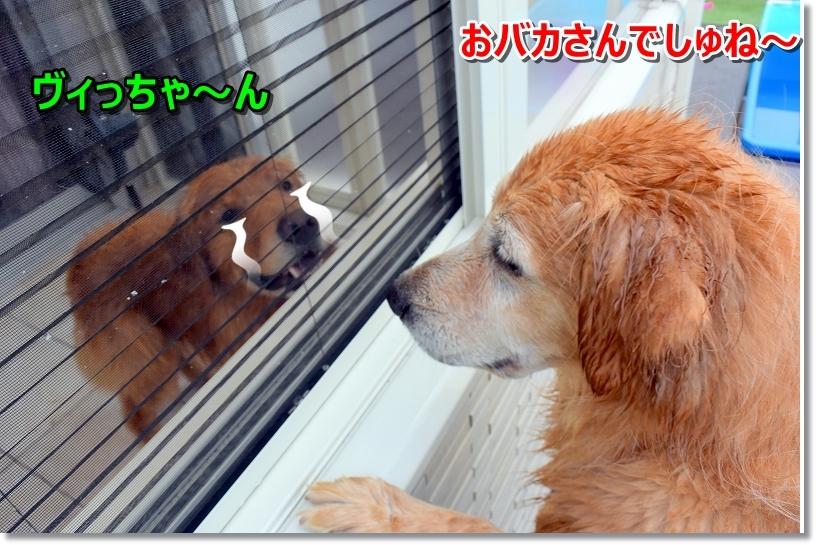 DSC_8773おバカちゃん