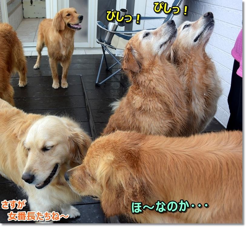 DSC_8810前列びし~!