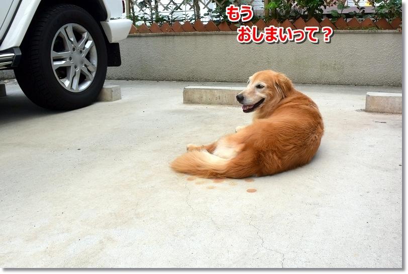 DSC_8851え~終了?