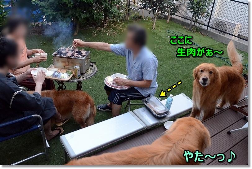 DSC_8422これって・・おいらのお肉?