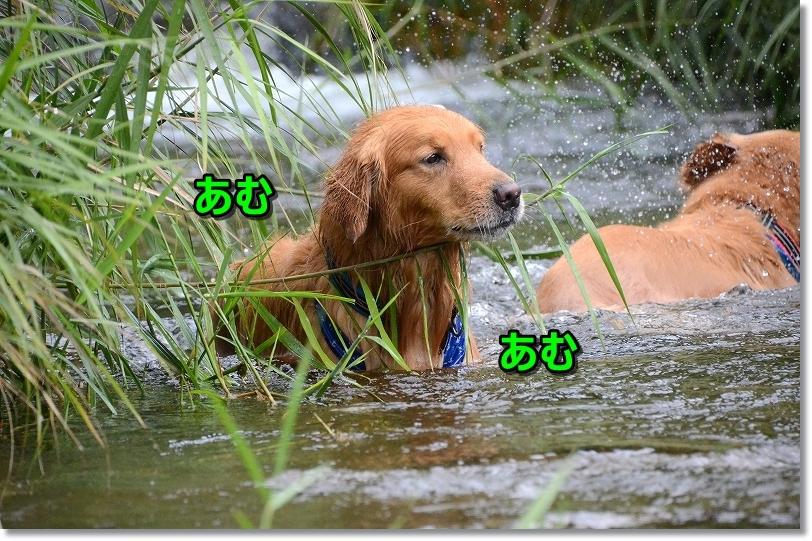 DSC_8526あむあむ