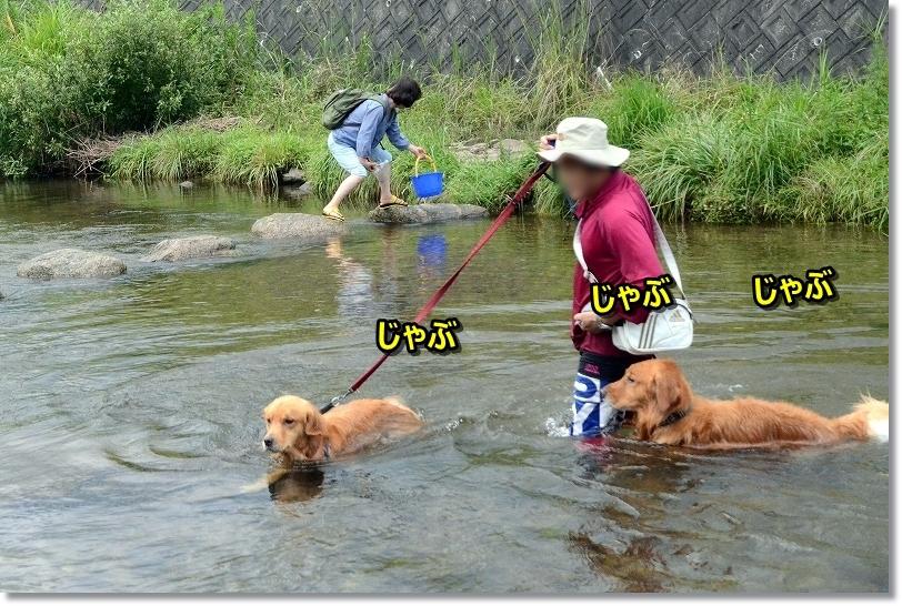 DSC_8625じゃぶじゃぶ泳いで移動