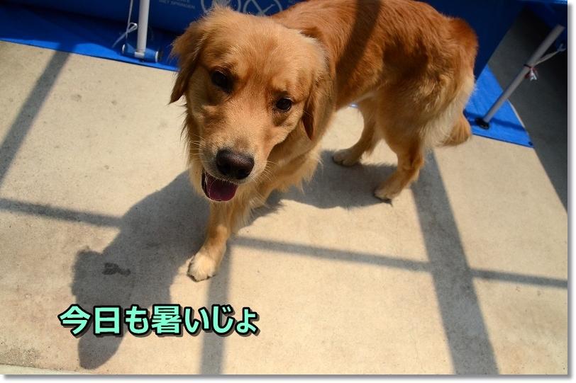 DSC_8228今日も暑いじょ~