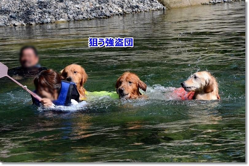 DSC_9029強盗集団