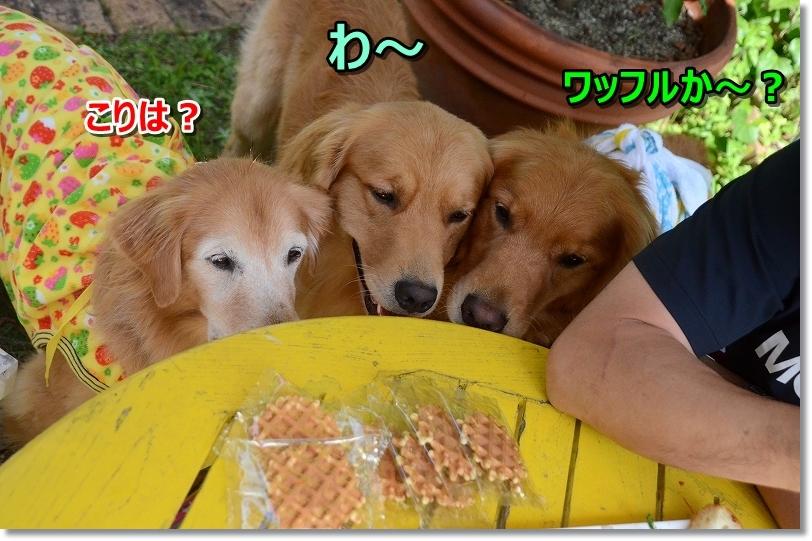 DSC_9201れあちゃんからお菓子いただいたじょ