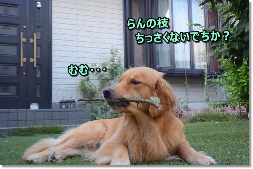 DSC_8957ぼくちんちっさい枝