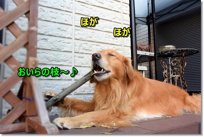 DSC_8960ほが~