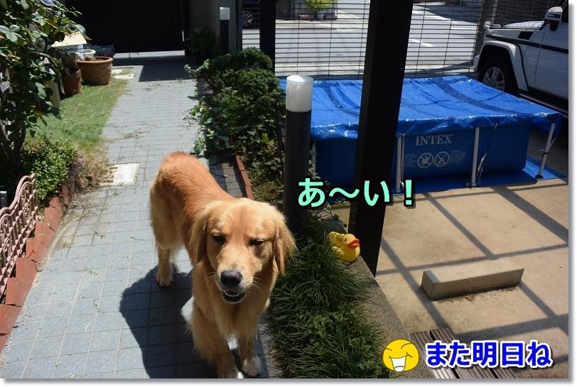 DSC_9126あ~い