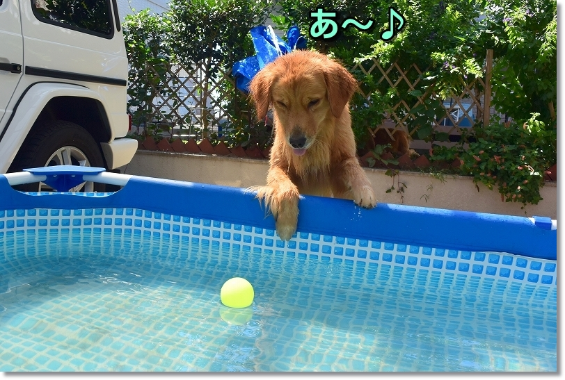 DSC_9305おっ!きいないボール