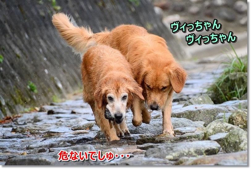 DSC_9369ヴィっちゃん