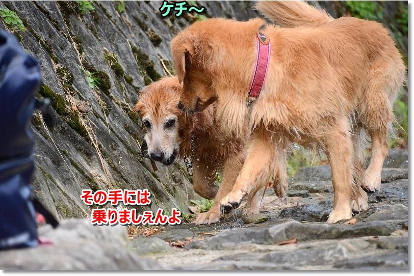 DSC_9371その手に乗りましぇんよ~