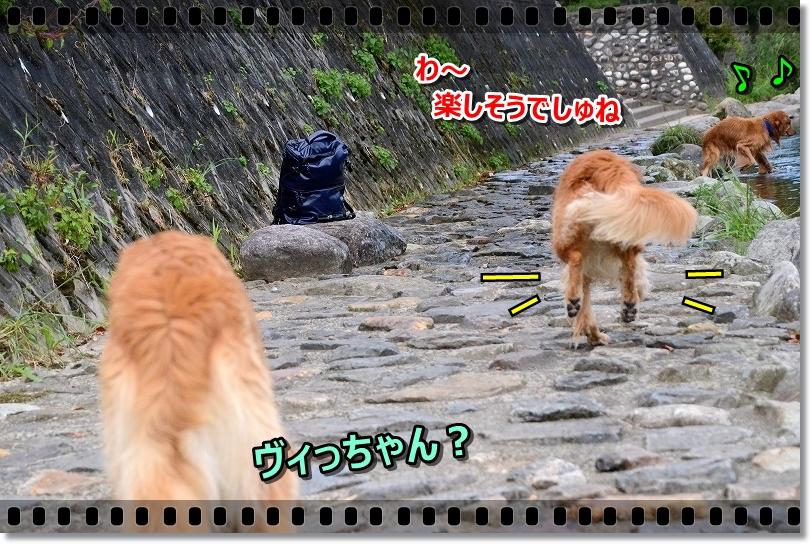 DSC_9388ヴィっちゃん?