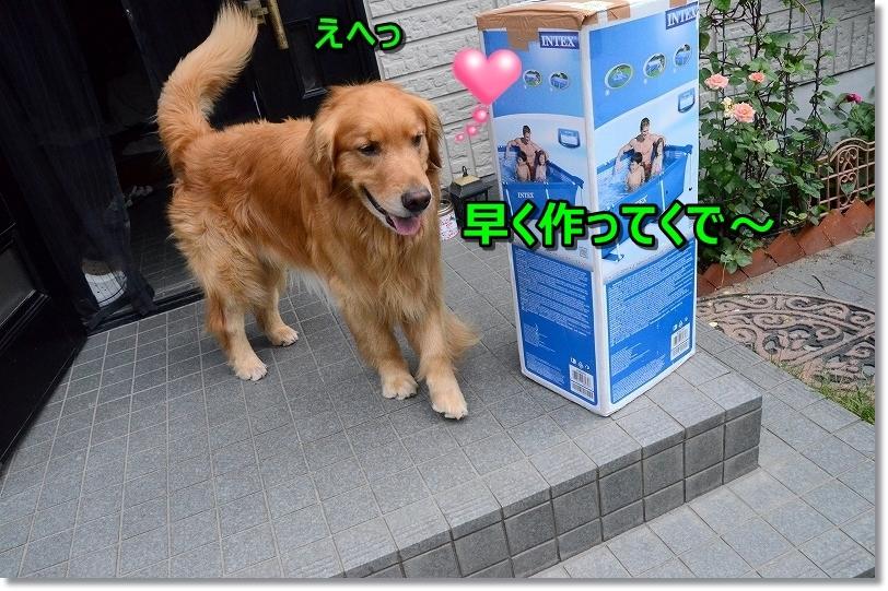 DSC_8025_20170814230608a01.jpg