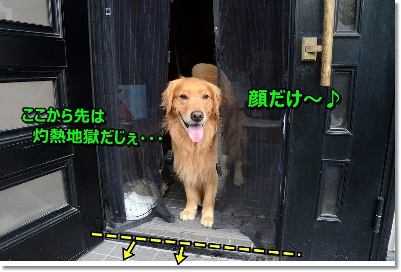 DSC_8029_20170814230614213.jpg