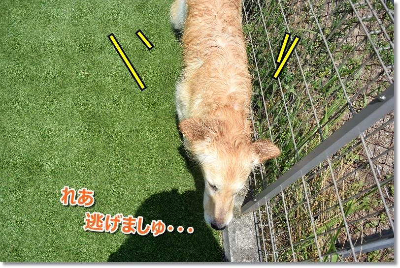 DSC_8521_20170725000844c99.jpg