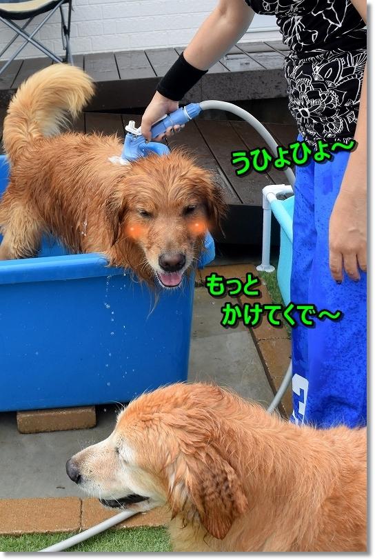 DSC_8711_201708132203342e7.jpg