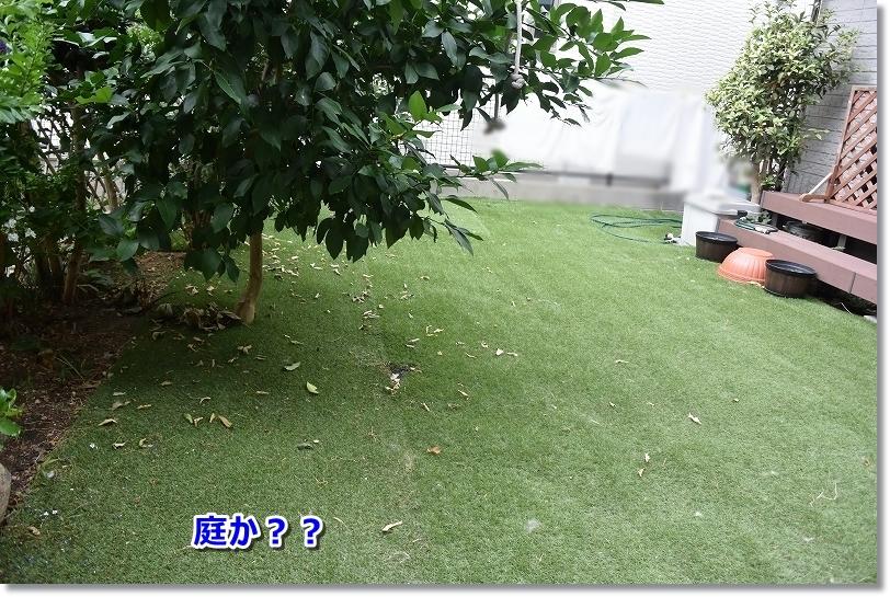 DSC_8826_201708171252074a5.jpg