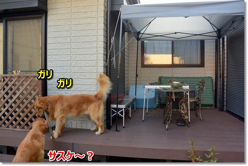 DSC_8946_20170910134306429.jpg