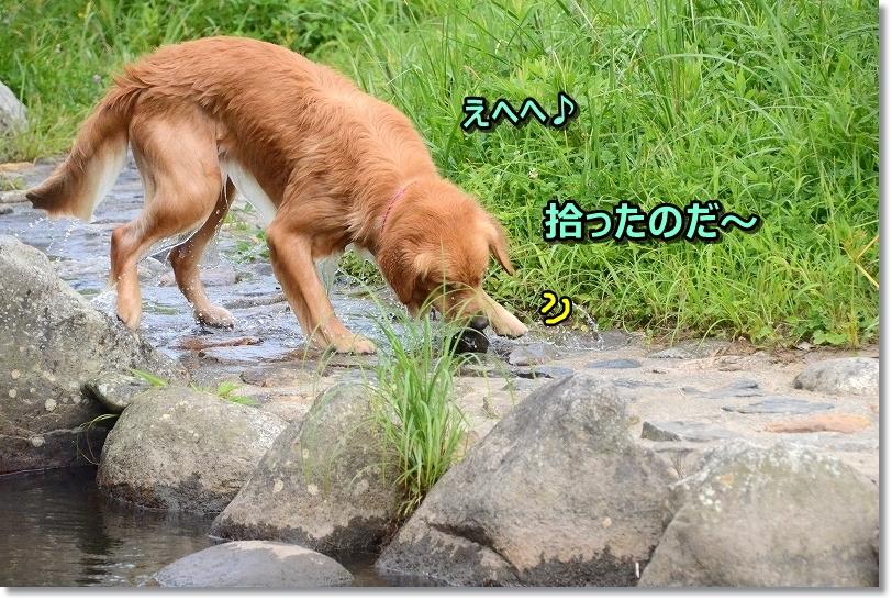 DSC_9399_201709201805136a8.jpg