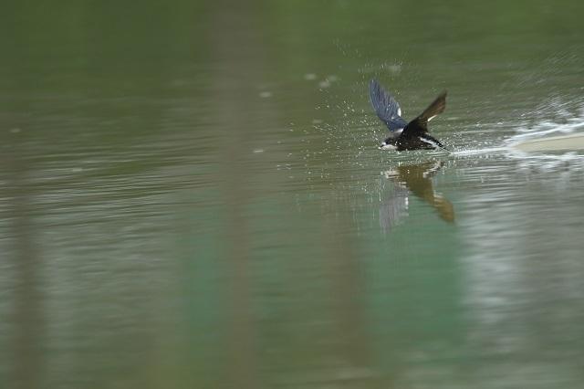 水面飛ぶ26p
