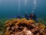 熱帯魚とダイバー