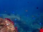 熱帯魚と海の青