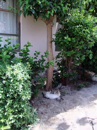 コローニ_お昼寝猫さん