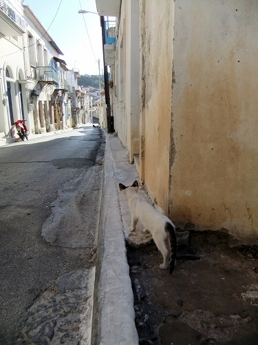 コローニ_カストロへの道で猫さん (1)