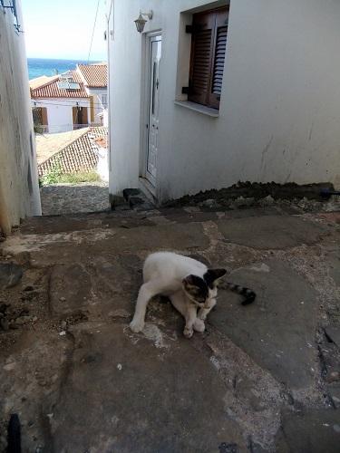 コローニ_カストロへの道で猫さん (2)