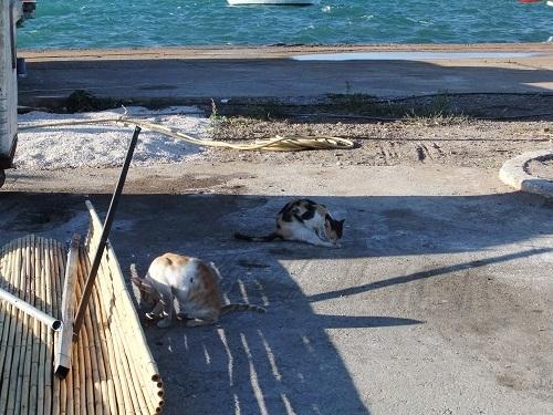 コローニ_海辺の猫さん