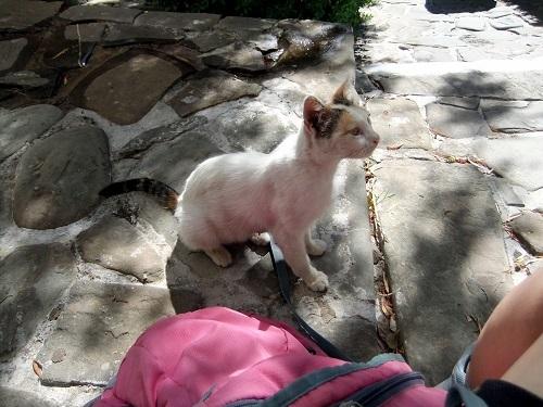 コローニ_階段道の猫さん