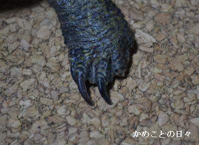 DSC_0063-s.jpg