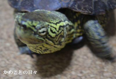 DSC_0064-s.jpg