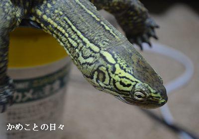 DSC_0068-s.jpg