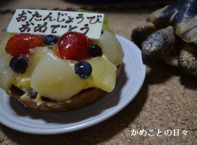 DSC_0286-m.jpg