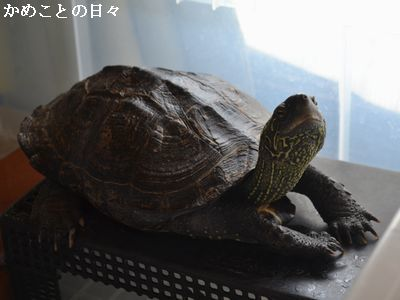 DSC_0474-c_20170811205231830.jpg