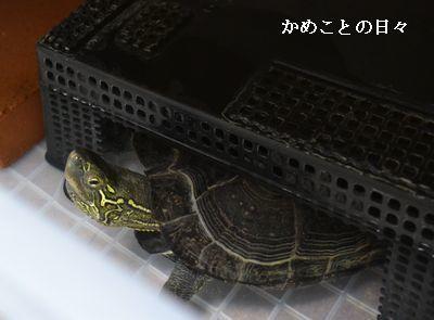DSC_0926-c.jpg