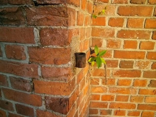 干尽謎のレンガ塀 (5)
