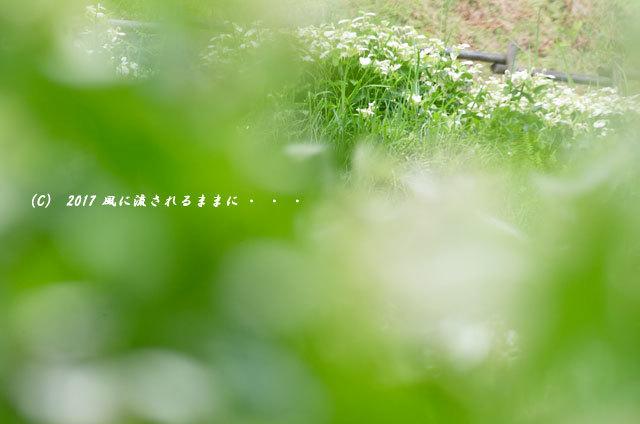 涼を求めて! 奈良・岡田の谷の半夏生園5