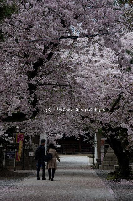 桜の情景 大阪・道明寺天満宮1
