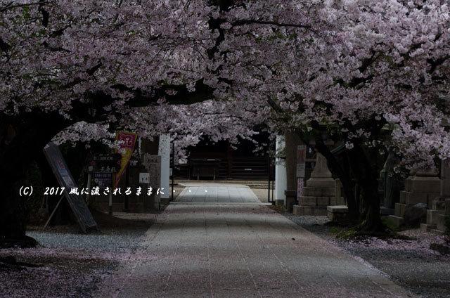 桜の情景 大阪・道明寺天満宮2