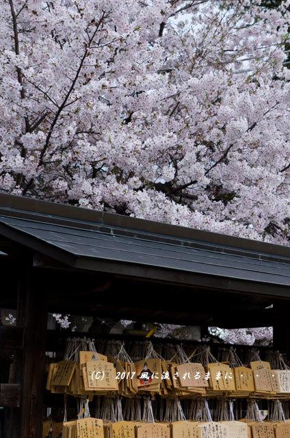 桜の情景 大阪・道明寺天満宮10