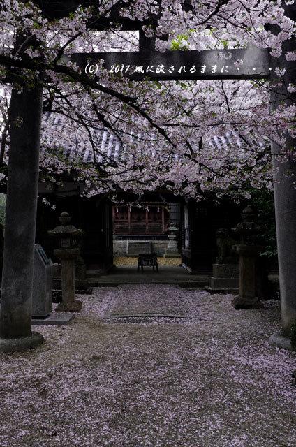 桜の情景 大阪・道明寺天満宮9