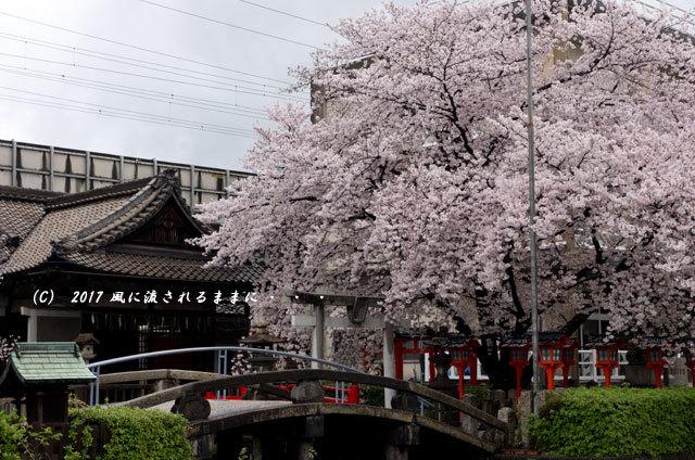 桜の情景 京都・六孫王神社(ろくそんのうじんじゃ)11