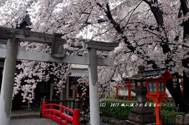 桜の情景 京都・六孫王神社(ろくそんのうじんじゃ)2