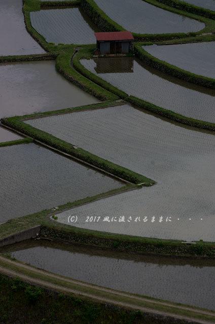 和歌山・有田川町 あらぎ島の棚田9