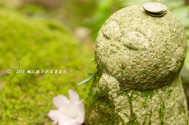 奈良・船宿寺に咲くツツジの花など10